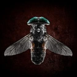 skull-bug-petri-damsten