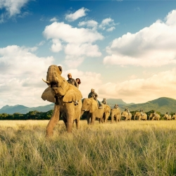 elephants-christof-van-der-wal...