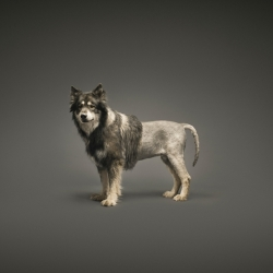 bosch-dogs-christof-van-der-wal...