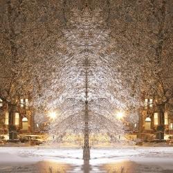 tree-glow-larry-hamill