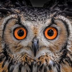 owl-yoshitaka-aida