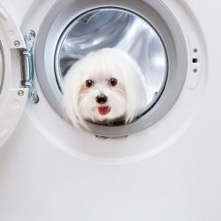 dog_washing_machine__120358