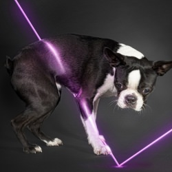 terrier_dog_animal_action_light__121681
