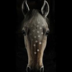 hoarse_brown_polka_dots_white_black_background__125742