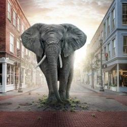 jumanji-elephant-john-fulton