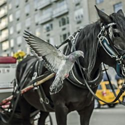 horse_pigeon__114540