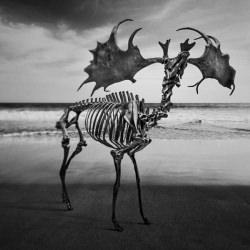 skeleton_deer_sea_black_and_white__119946