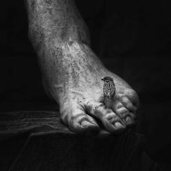 foot_david_bird_black_and_white__127355