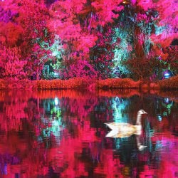reflection_duck_pond_color_tree_las_vegas__116682