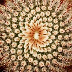 cactus_close_up__117688