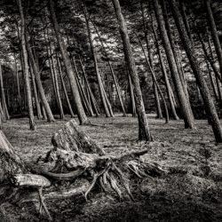 forest_black_white_root__126086