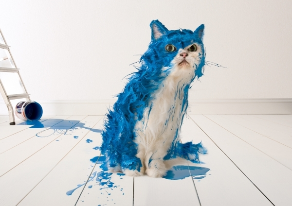 one_eyeland_blue_paint_cat_by_colin_thom