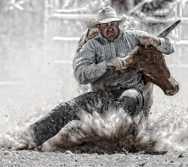 Steer Wrestler One by Steve
