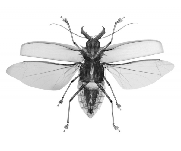 Photograph Nick Veasey Flying Bug on One Eyeland