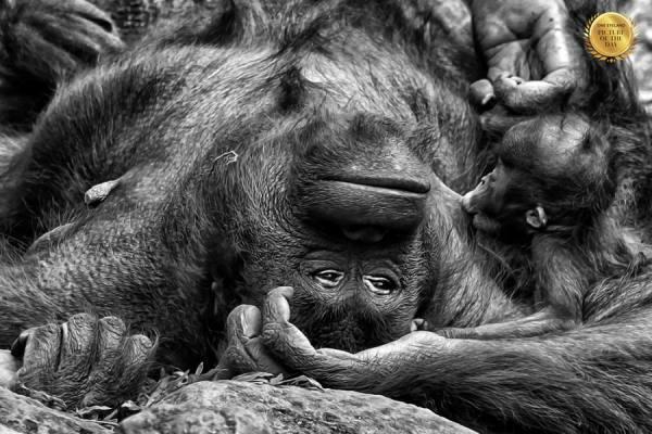 Photograph Duduh Sadarachmat My Love Baby on One Eyeland