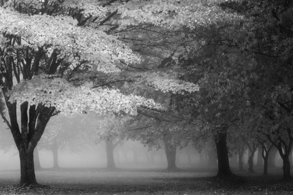 Photograph Michael Vandewalker Autumn Fog on One Eyeland