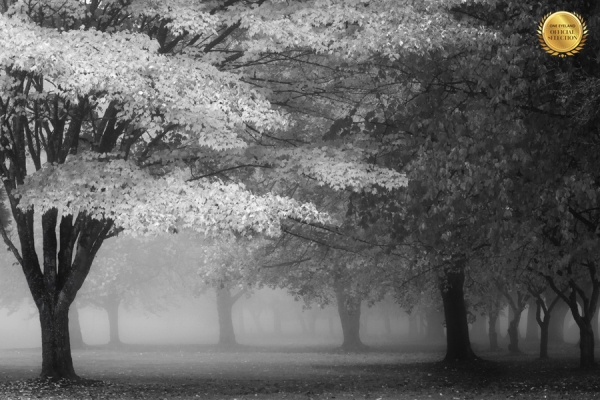 Photograph Michael Vandewalker Autumn Fog on One Eyeland
