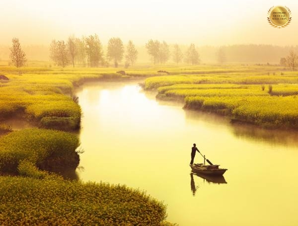 Photograph Thierry Bornier River Of Rapeseed on One Eyeland