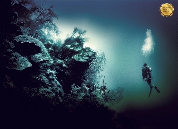 Photograph Julian Calverley Cayman Coral Garden on One Eyeland