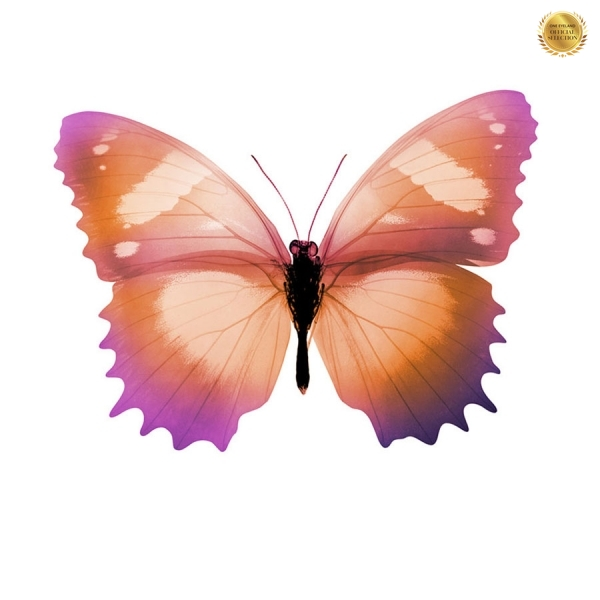 Photograph Nick Veasey Butterfly on One Eyeland