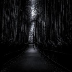 bamboo-road-yoshitaka-aida