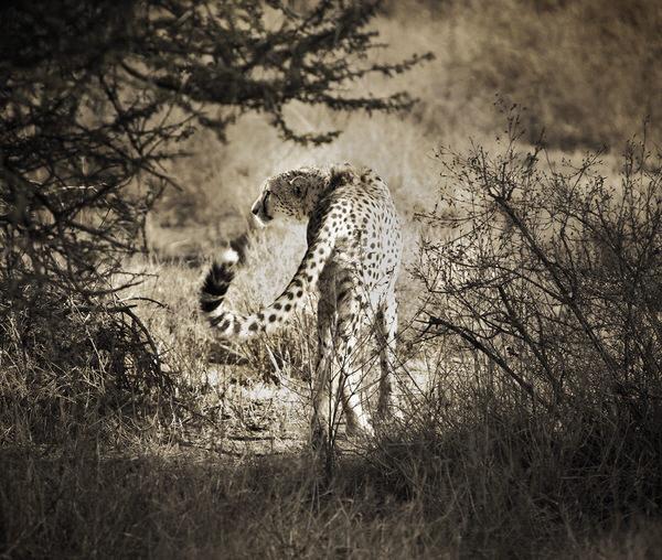 Photograph Chris Gordaneer Tanzania 1 on One Eyeland