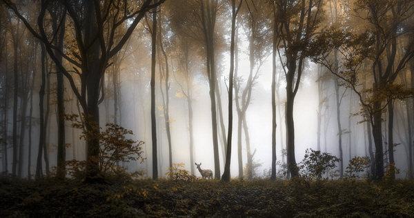 328805-one-eyeland-nature-by-veselin-atanasov.jpg