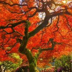 Ich wünsche Tree-Craig Bill-Finalist-NATURE-Trees -890