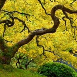 Das Goldene Zeitalter-Craig Bill-Finalist-NATURE-Seasons -889
