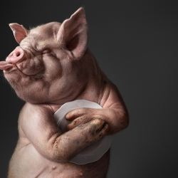Clingy Animals-Surachai Puthikulangkura-silver-CGI ARTIST-CGI Artist-965