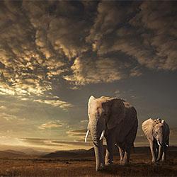 Walking in Savannah-Jackson Carvalho-finalist-NATURE-Wildlife -2060