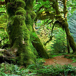 Hall of Mosses-Craig Bill-Finalist-SPECIAL-Panoramic -2214