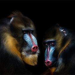 Animals-Pedro Jarque Krebs-silver-NATURE-Wildlife -3087