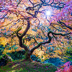 Gaia-Torleif Lie-bronze-NATURE-Trees -3192