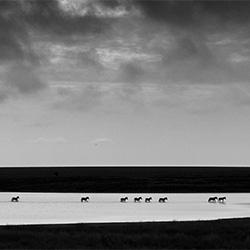 Zebra Crossing-Zhayynn James-finalist-NATURE-Wildlife -3532