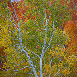 Lightening Tree-Joshua Smith-finalist-FINE ART-Abstract -3493