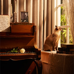 Candlelight Blues-Charit Pusiri-Finalist-WERBUNG-Andere -3376