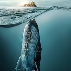 Whales-Jose Reis-bronze-RETOUCHER-RETOUCHER-3285