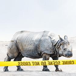 Conceptual Animal Series-Keith Tsuji-silver-ADVERTISING-Conceptual -3827