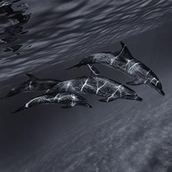 Sentient Beauty-Torleif Lie-bronze-NATURE-Underwater -3901