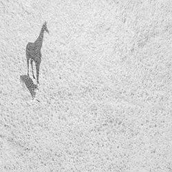 Big Shadow-THOMAS VIJAYAN-silver-NATURE-Wildlife -4516