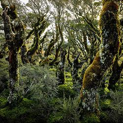 Key Summit Track-Stephan Romer-Finalist-NATURE-Trees -4252