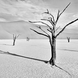 Desert Shadows-Andy Lerner-finalist-FINE ART-Landscape -4359