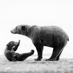 Mother & Child-Andy Lerner-bronze-NATURE-Wildlife -4051
