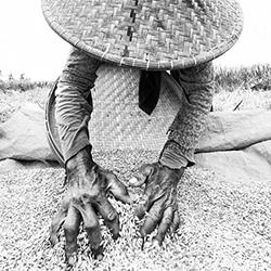 Rice Worker-Andy Lerner-bronze-FINE ART-Portrait -4053
