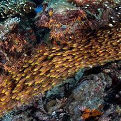 Reef Ring-Andy Lerner-finalist-NATURE-Underwater -4361