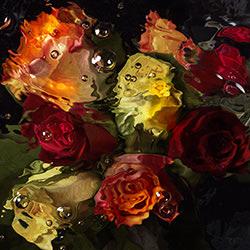 Watercolour roses-Mark Mawson-finalist-FINE ART-Abstract -4272