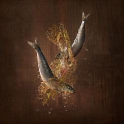 MARINE SPECIES-Wesley Dombrecht-bronze-FINE ART-Still Life -4637