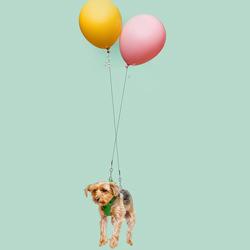 Floating Dogs-Ian Ross Pettigrew-silver-SPECIAL-Pets -5117