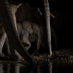 Safety at night-Tracey Lund-finalist-NATURE-Wildlife -4927